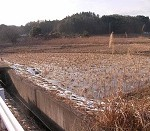キサラヅ田の草取り唄 作詞